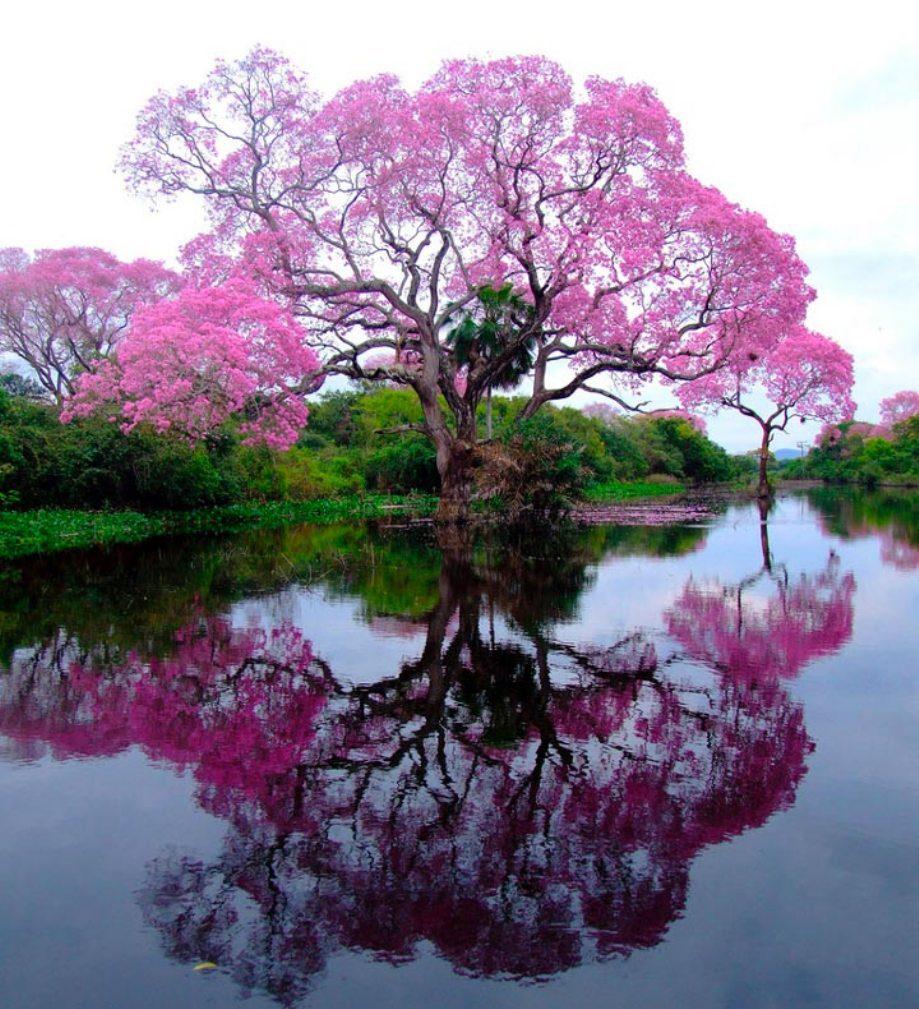 beautiful-landscape-nature-4